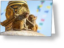 Two Macaques On Top Of Chorten Greeting Card