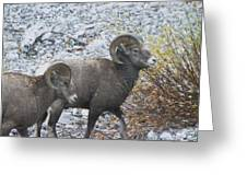 Two Male Rams Greeting Card
