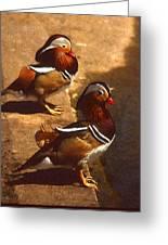 Two Mandarins Greeting Card