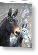 Two Mules For Sister Sara Greeting Card