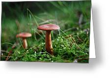 Two Mushrooms Greeting Card