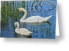 Two Mute Swans Greeting Card