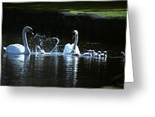 Two Mute Swans With Young Cygnus Olor Greeting Card