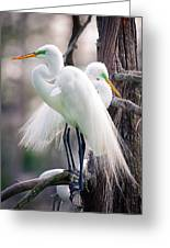 Two Of A Kind Greeting Card by Tammy Smith
