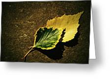 Two Of Birch Leaves Greeting Card