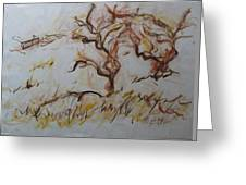 Two Olive Trees Greeting Card