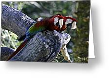 Two On A Branch Greeting Card