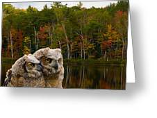 Two Owlets At A Lakeshore Greeting Card