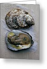 Two Oysters Greeting Card