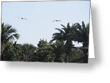 Two Pelicans Greeting Card