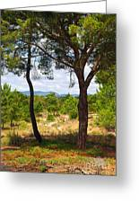 Two Pine Trees Greeting Card by Carlos Caetano