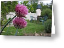 Two Pink Chives Greeting Card