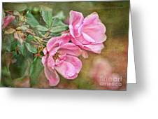 Two Pink Roses I  Blank Greeting Card Greeting Card