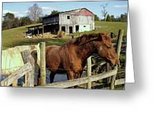 Two Quarter Horses In A Barnyard Greeting Card