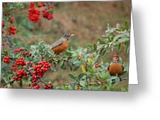 Two Robins Eating Berries Greeting Card