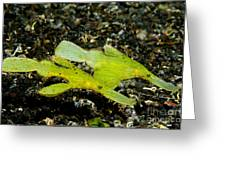 Two Robust Ghost Pipefish In Volcanic Greeting Card by Steve Jones