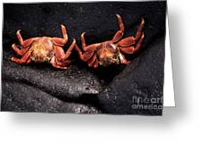 Two Sally Lightfoot Crabs Greeting Card