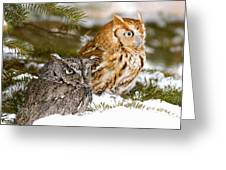 Two Screech Owls Greeting Card