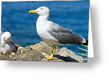 Two Seagull Greeting Card