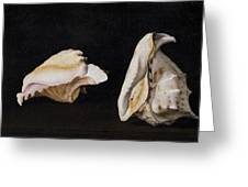 Two Shells Greeting Card