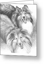 Two Shelties Pencil Portrait Greeting Card