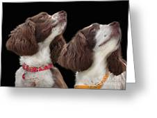 Two Spaniels Greeting Card