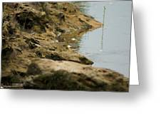 Two Spotted Sandpipers On The Flint Rivers Banks Greeting Card