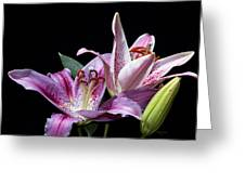 Two Star Lilies Greeting Card