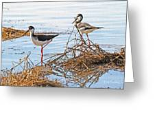 Two Stilts At The Pond Greeting Card