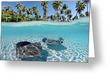 Two Stingrays 1 Greeting Card