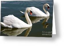 Two Swimming Swans Greeting Card