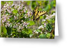 Two Tailed Swallowtail Greeting Card
