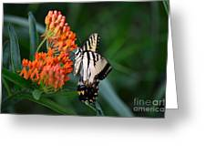Two-tailed Swallowtail Greeting Card