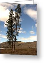 Two Tall Pines Greeting Card