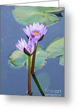 Two Tall Water Lilies Greeting Card