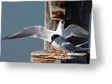 Two Terns Greeting Card by Diane Rada