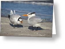 Two Terns Talking Greeting Card