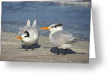 Two Terns Watching Greeting Card