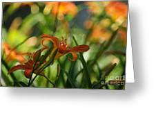 Two Tiger Lillies...   # Greeting Card