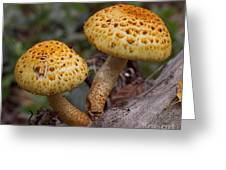 Two Toadstool Chums On A Log Greeting Card