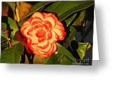 Two-tone Camellia Greeting Card