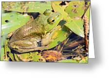 Two Toned Frog Greeting Card