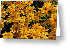 Two Toned Yellow Blooms Greeting Card