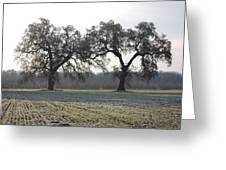 Two Tree Frosty Morning Greeting Card