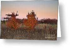 Two Trees At Sunset Greeting Card