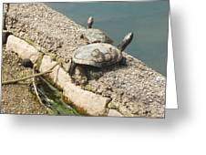 Two Turtles Greeting Card
