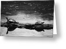 Two Turtles On A Log Greeting Card