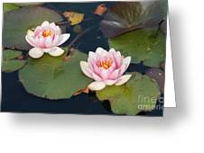 Two Water Lillies Greeting Card