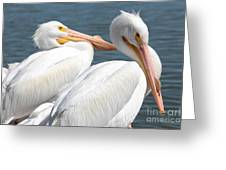 Two White Pelicans Greeting Card
