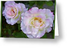 Two White Roses Border Greeting Card